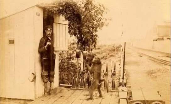 1880 yılında James Edwin Wide adındaki engelli demiryolu işçisi, Güney Afrika pazarını gezerken gerçeküstü bir şeye tanık oldu