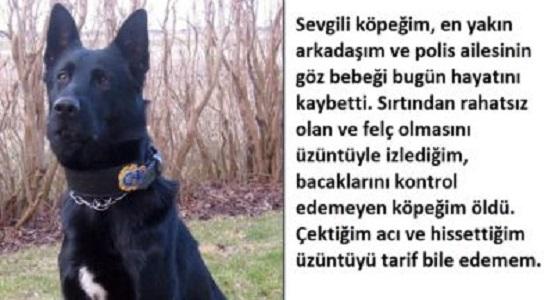 Bir Polisin Ölen Polis Köpeği İçin Yazdığı Mektup Okuyanları Ağlattı