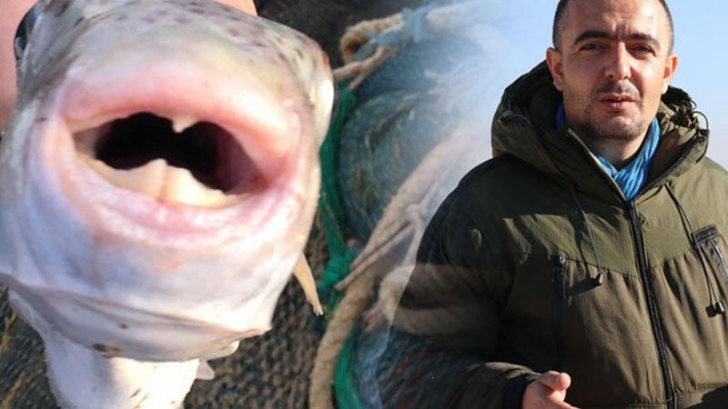 Bu Balığı Yiyen Ölüyor