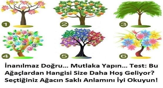 Seçtiğiniz Ağaç Sizin iç Dünyanızı Ortaya Çıkaracak