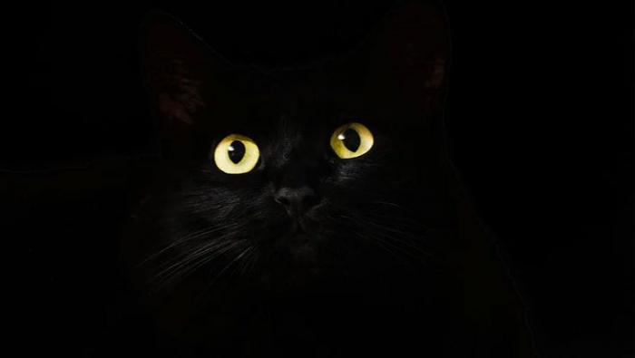 Siyah kedileri corona virüse çare diye yiyorlar