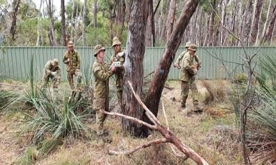 Avustralya'da Askerler Boş Vakitlerinde Kolalara Bakıyor Onlarla İlgileniyor