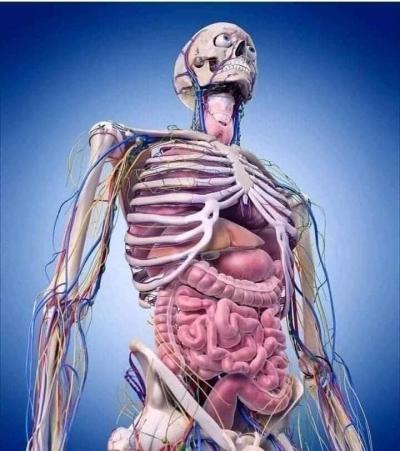 Bir İnsan Vücudunda;