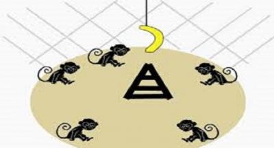 Bir kafese beş maymun koyarlar.