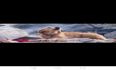 Elazığ'daki Depremde Enkazın Üstünde Bir Köpek Var: O Köpeğin Duygusal Hikayesini Biliyor musunuz?
