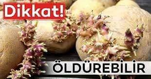 FİLİZLENMİŞ PATATESE DİKKAT!!!