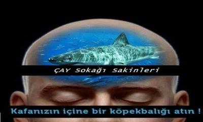 Kafanızın içine Bir Köpek Balığı Atın !!!!!!!!!