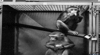 Maymun ahlakı