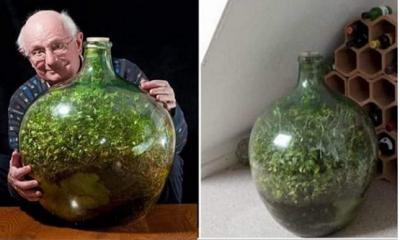 Soru:Dış ortamla bağlantısı tamamıyla kesilen bitkiler yaşar mı?