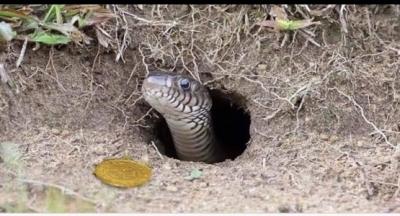 Zamanın birinde bir oduncu ormanda odun keserken çalı arasında bir yılan görür elindeki baltayı kaldırıp yılanın başına vurmak üzereyken